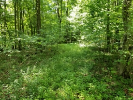 Beautiful Townsend Hollow Road -