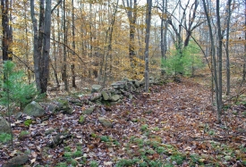 Private Wooded Setting - Private Wooded Setting