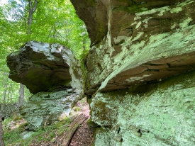 Woods & Rock Ledges - Wooded Land Parcel